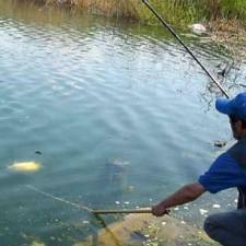 Feeder tehnika - lov krupne ribe