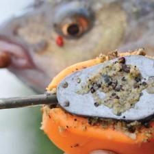 Pecanje deverike pomoću šarandžijske taktike