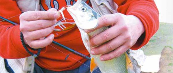 Bucov važna riba